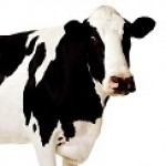Profile picture of VenusCow